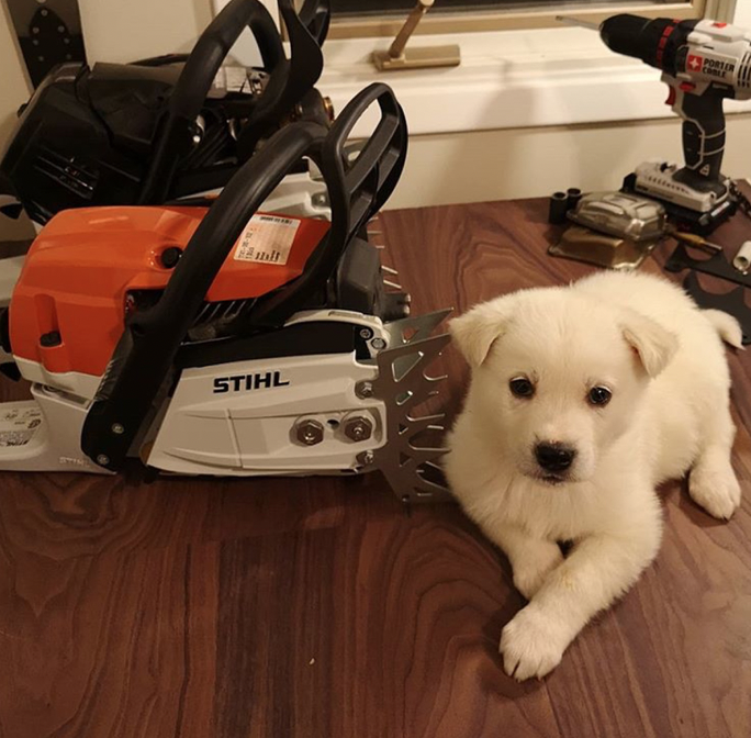 Stihl Chainsaw and Puppy